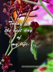 24-hummingbird-jpg