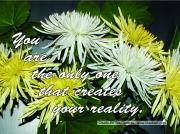 60-chrysanthemums-jpg